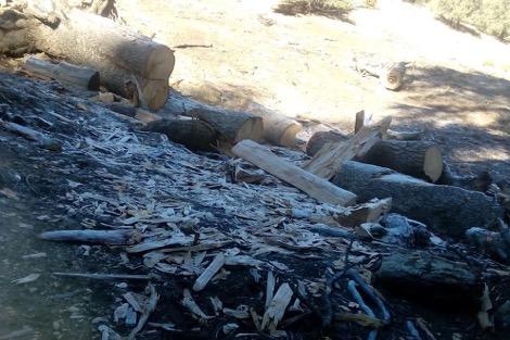 غابات تحتضر بإقليم ميدلت .. والساكنة تستغيث