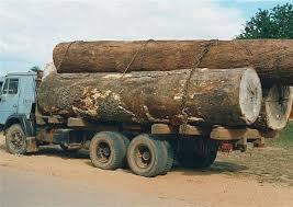 فضيحة – توقيف شاحنة محملة بخشب الارز بأغبالة قادمة من غابة تونفيت