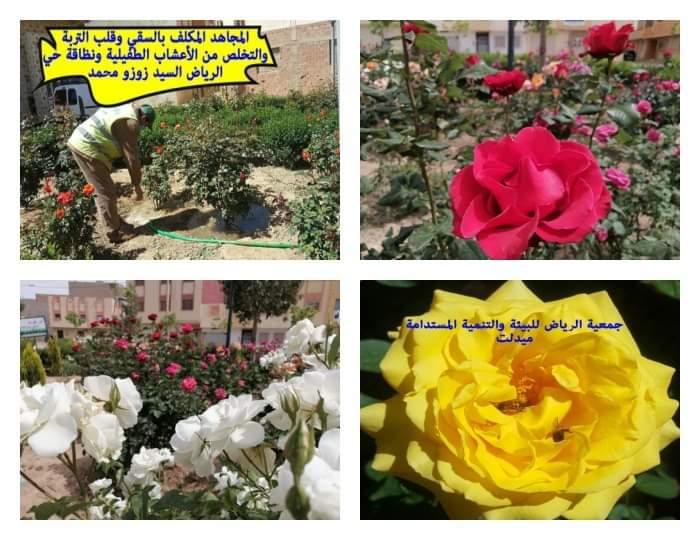 الفضاءات الخضراء بمدينة ميدلت في زمن الحجر الصحي بقلم : علي باصدق ( جمعية الرياض ميدلت )