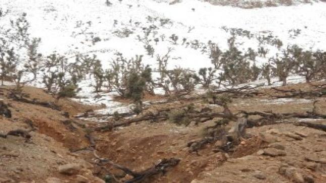 لجنة مركزية تحل بميدلت للتحقيق في كوارث غابة العياشي ،وبرلمانية المنطقة تصرح.